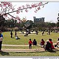 201602新竹公園&泰鑫汽車櫻花開