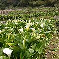 陽明山-台北的後花園