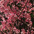 2011年陽明山花季外拍