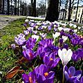 Spring Utrecht