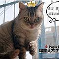 貓星人捕獲人類的?