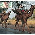 PAKISTAN 巴基斯坦