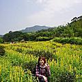 20150315樟樹、樟湖環形步道賞魯冰花