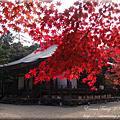 20101102-10京阪 紅葉狩-高雄絕景楓紅-神護寺