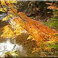 20101102-10京阪 紅葉狩-高雄絕景楓紅-西明寺、指月亭