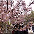 DAY2京阪花見散策大阪造幣局