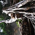 廢墟-華山