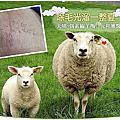 [ 除毛光溜一整夏 ]天哪~偶素綿羊嗎?元和雅醫美除毛去~