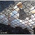 2016-08-16_遊記│宜蘭員山_可達休閒羊場之吃吃餵餵體驗趣 by.黑俠客