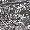 2013 冰風暴