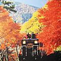 京都嵐山-嵯峨野トロッコ觀光小火車