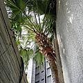 檳榔樹?椰子樹?傻傻分不清……?
