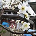 2010春節到東京去看雪~東京