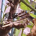 2010-6-15蜻蜓