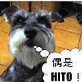 ♥ Love Love♥ Hito
