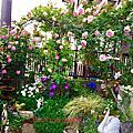 2018玫瑰花園紀錄