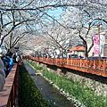 2011韓‧春-手機照