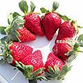 大湖~滿意草莓農場