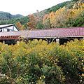 武陵農場梅花