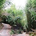 司馬庫斯巨木
