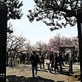 茨城偕樂園賞梅季