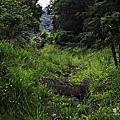東勢林場螢火蟲季