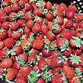 花間集草莓
