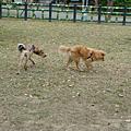 20080309四號公園
