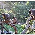20131123台中郭叔叔獼猴生態園區