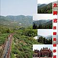 20210403 太興岩景觀茶園步道