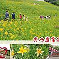 20210501 虎山巌金針花