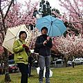 看櫻花不用去日本