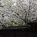 【P】2007-04-16 日本關西之旅