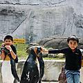 2008木柵動物園