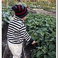 農家樂-阿鼓菜園種菜記