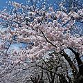 日本東北岩手公園(盛岡城跡)