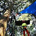 1050924 主題活動-森林攀樹趣