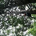 1061118-主題活動-森林攀樹趣