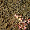 涉成園,東本願寺,大阪道頓堀(09京阪五