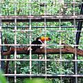 991128 逛逛壽山動物園