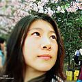 新竹公園 賞櫻花