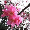 照相去~2010春假櫻花祭