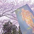【韓國旅遊】JKN Tour 鎮海賞櫻一日遊 看全韓國最美的櫻花