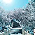 【中國 黃山】走進冰雪奇緣的山中仙境 行前準備 交通住宿 景點行程全攻略