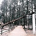 【雲南 麗江】玉龍雪山雲杉坪 傳說中的第三國度 納西族男女殉情之地