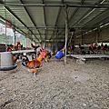 【台中 谷關】松鶴部落 漫步五葉松步道 裡冷部落 吃紅藜饅頭 製作口簧琴 南勢部落香蕉飯體驗 泰好玩團隊傳統樂器體驗