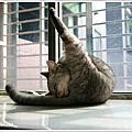 窗台邊的貓