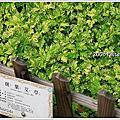 20080316 士林官邸玫瑰展