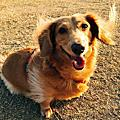 從她的眼神看見生命的溫暖之被送行者養到的狗很幸福