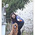 2012.03.04~清境.意外的賞櫻~